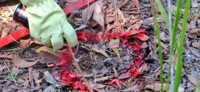 Dos niños indígenas murieron al caer en un campo minado en Antioquia