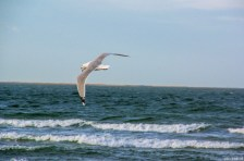 Flying Bird / Baltic Sea