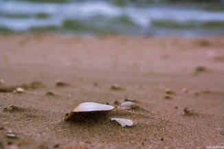 Shell / Baltic Sea