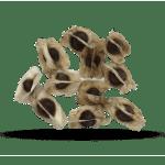 urban-africa-naturals-moringa-zaden-moringa-seeds