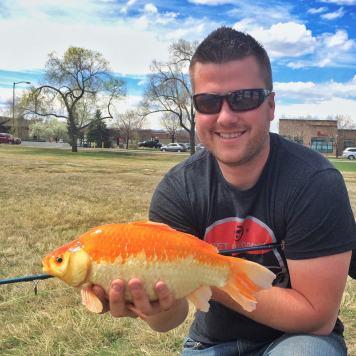 Sarasa Common Goldfish