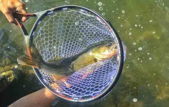 1st walleye in the matte black RiverRat