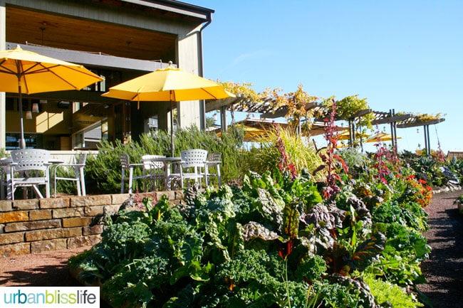 LynMar Estate Vineyard in Sonoma, California
