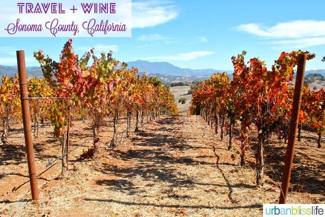 vineyards of sonoma county, california
