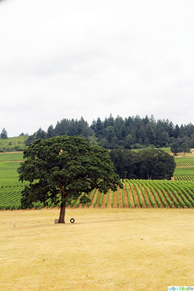 Oregon Wine Country Half Marathon 2015 at Stoller Winery on UrbanBlissLife.com