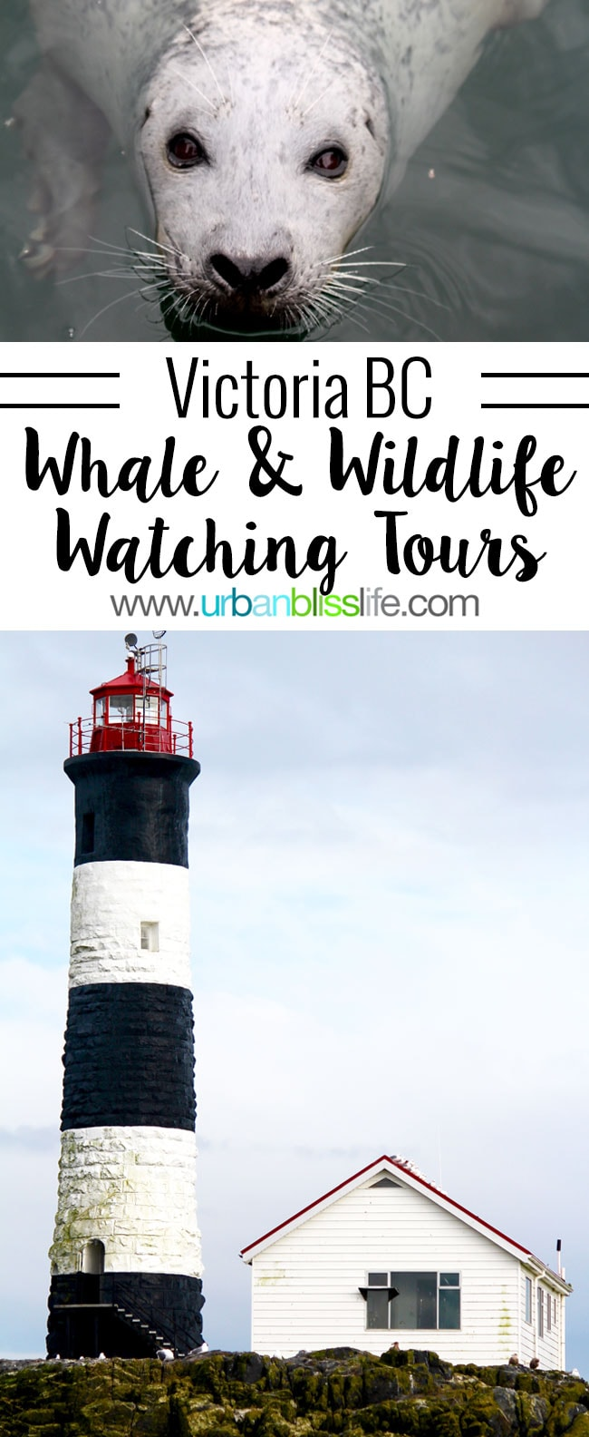 Whale & Wildlife Watching Tours in Victoria BC on UrbanBlissLife.com