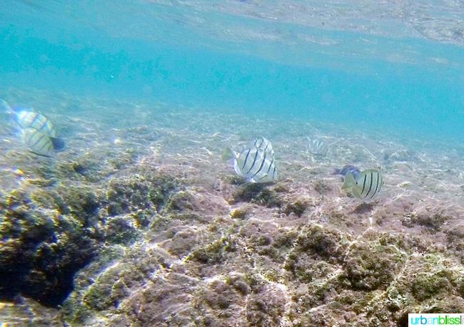 Snorkeling in Hanalei Bay Kauai Hawaii Activities on UrbanBlissLife.com
