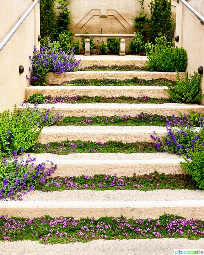 Lavender steps at Noyo Harbor Inn Fort Bragg, California.