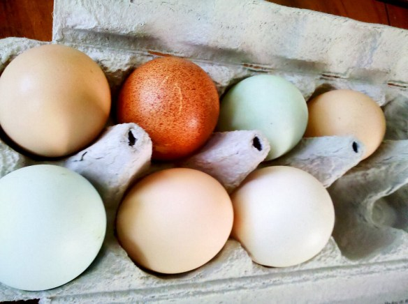 Colorful Chicken Eggs - photo by Todd Dwyer