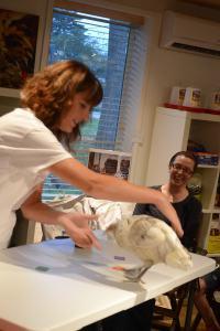 Giene Keyes demonstrating chicken clicker training - photo courtesy of Giene Keyes