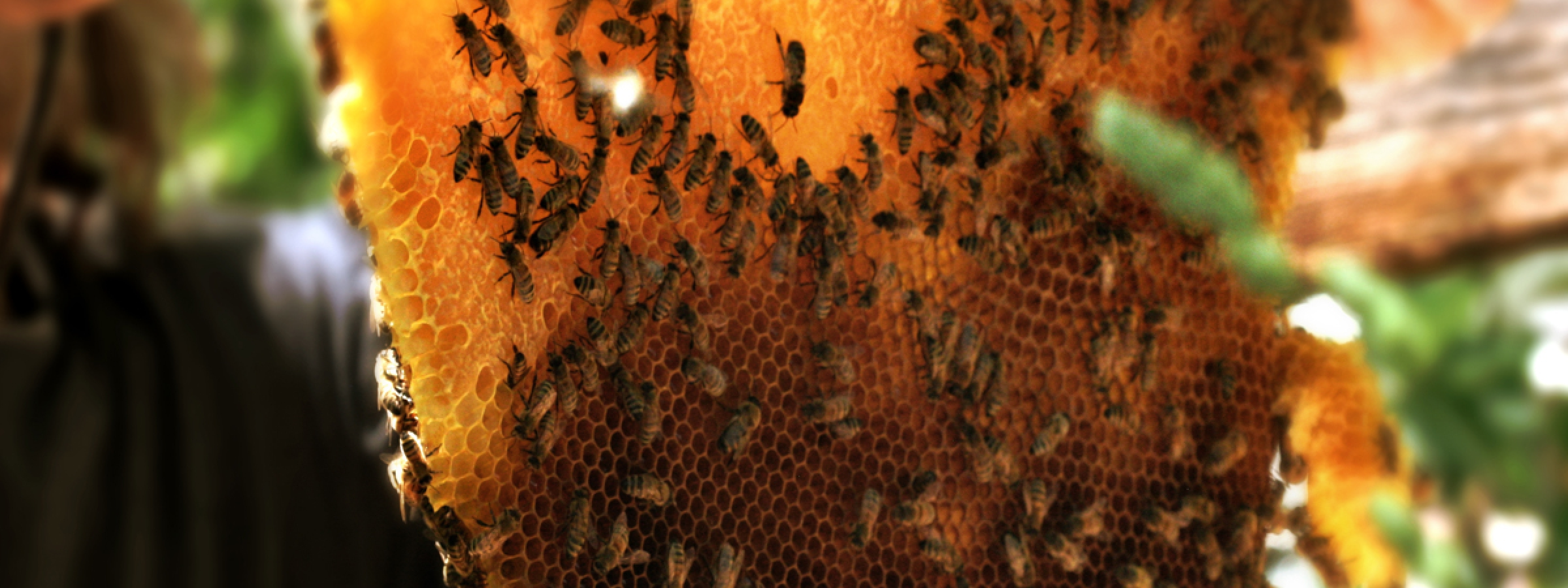 Urban Conversion - Colony Collapse Disorder