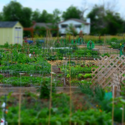Two Perspectives on Gardening