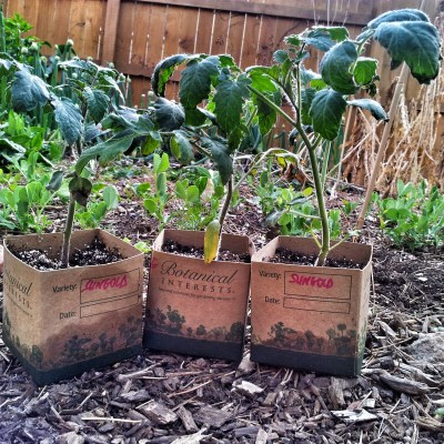 Five Steps to Harden Off Seedlings