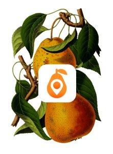 FF-app - pears & logo