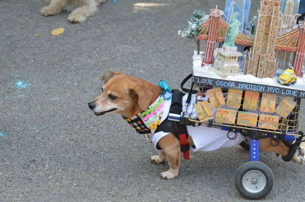 Dog Dressed as the Greatest City on Earth