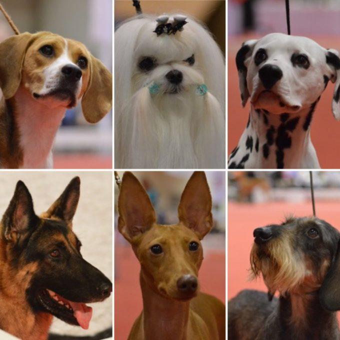 Can You Identify the Breed Quiz Urban Dog