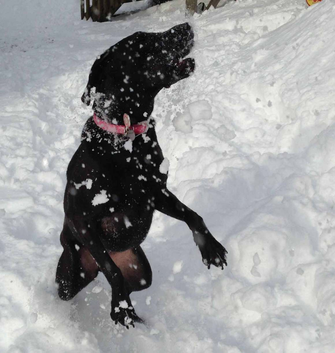 Why do dogs love snow