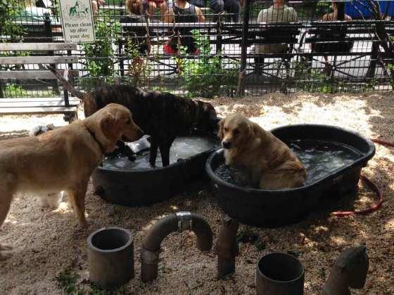 Union Square Dog Park