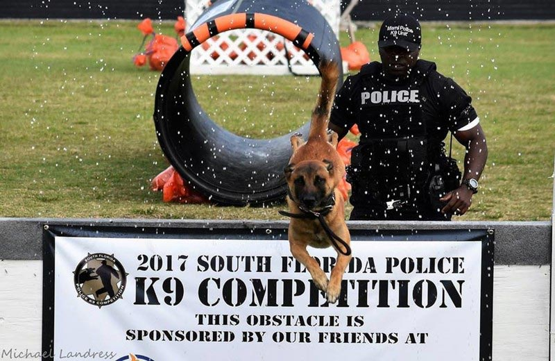 K9 Competition (Photo: Michael Landress / Palm Beach Post)