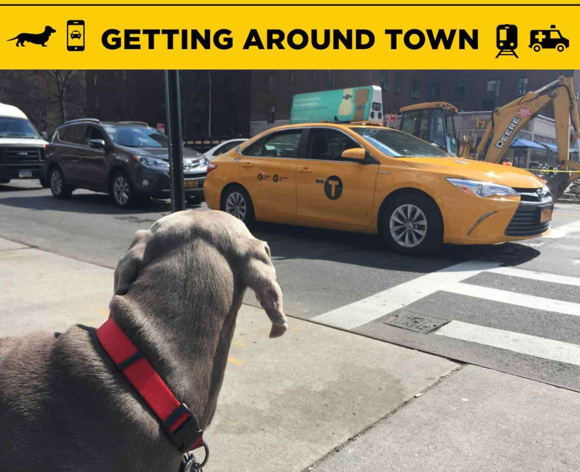 Pet transportation NYC