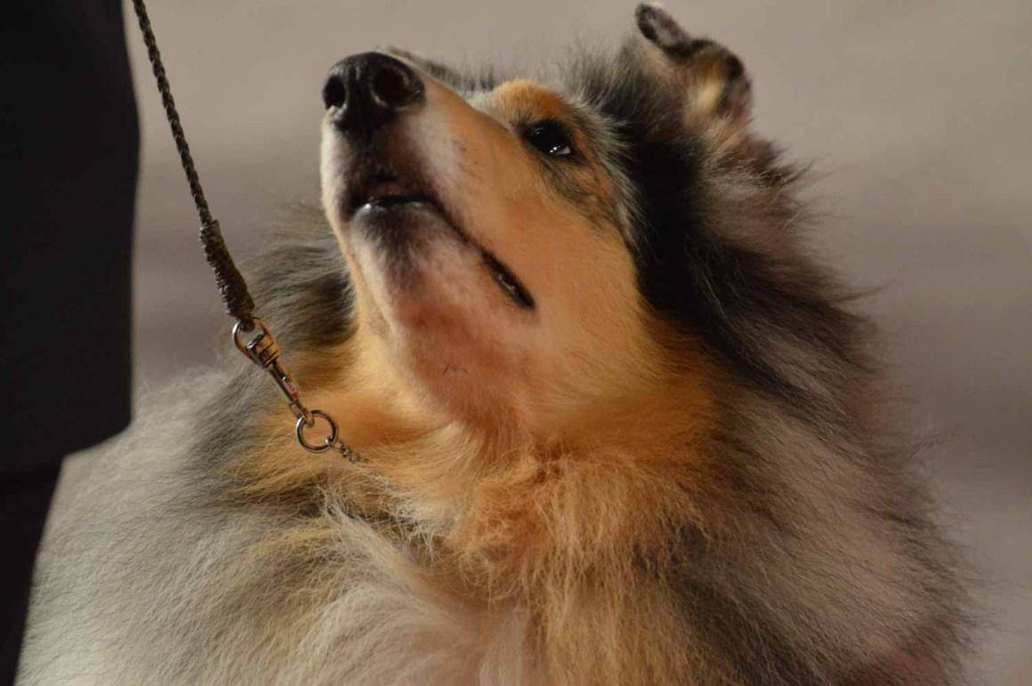 Canine Extravaganza