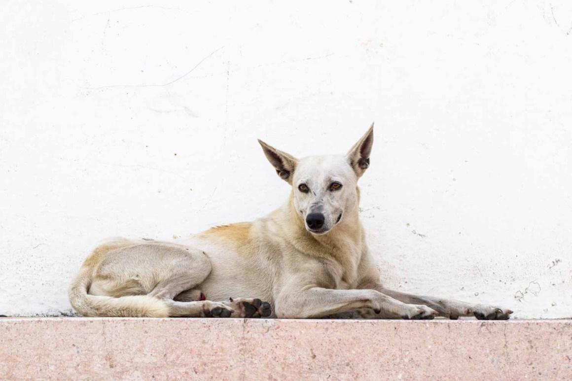 Dominican Republic (Photo: Natalie Siebers)