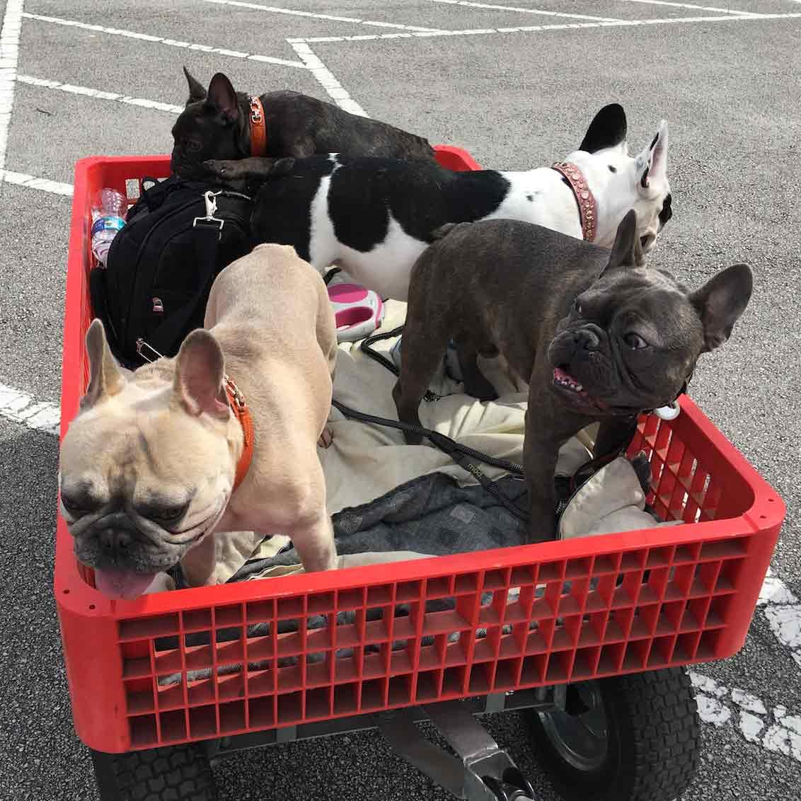 Dogs Fort Lauderdale, FL