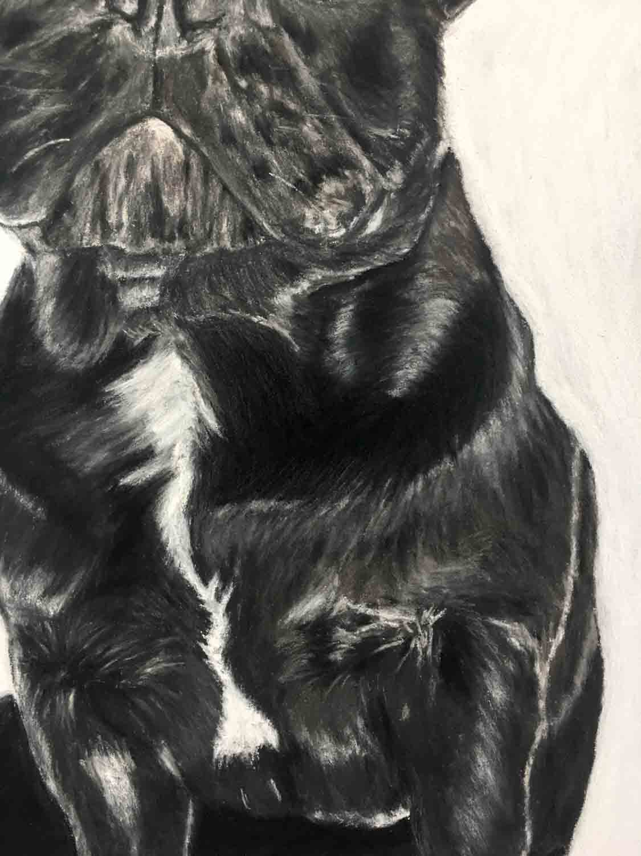 Pet Portraits by Davis McDavis