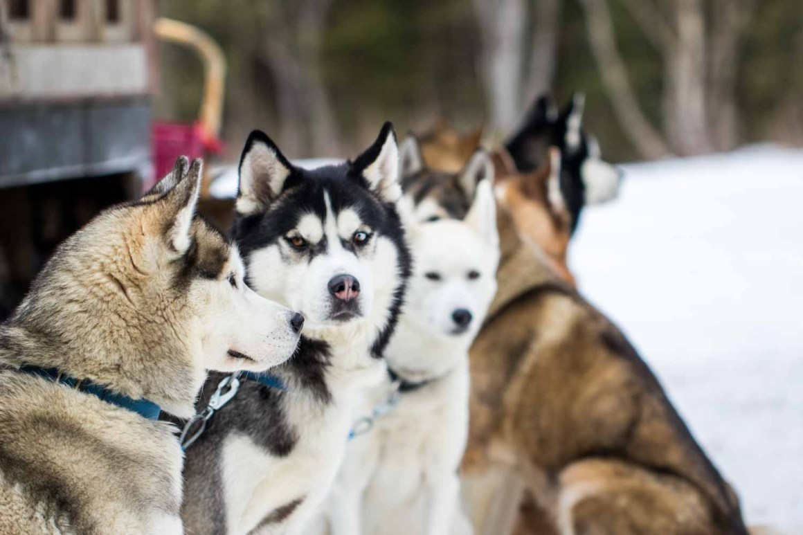 Dog Sledding in Vermont (Photo: Natalie Siebers)