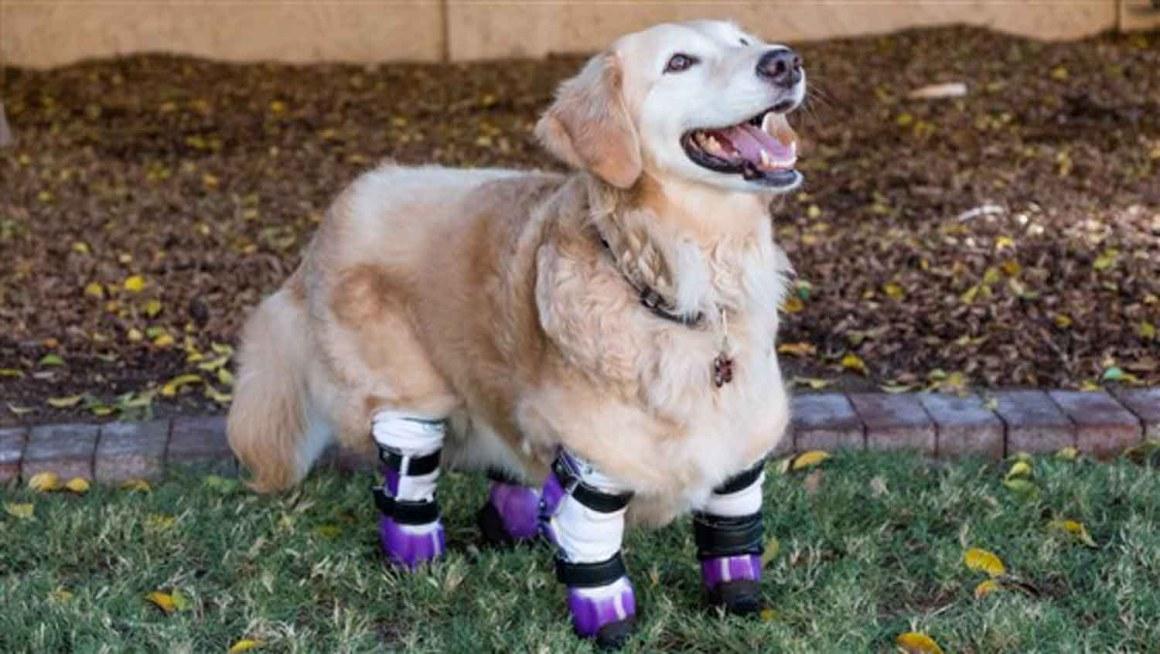 The Amazing Therapy Dog Chi Chi Wins Big
