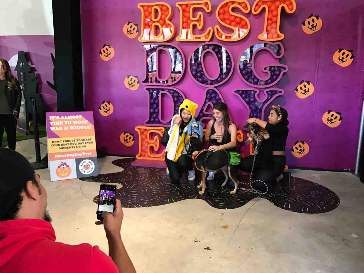 The Dodo Best Dog Day Ever Halloween Edition