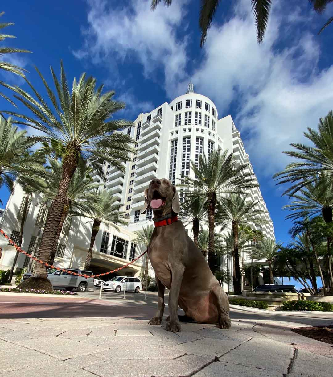 five things to do with your dog in miami