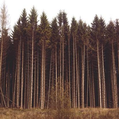 La forêt de Qohor