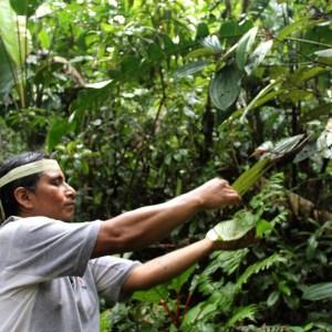 Telmo Rodas partageant ses connaissances sur les propriétés des plantes de la jungle amazonienne, communauté Yaku Runa
