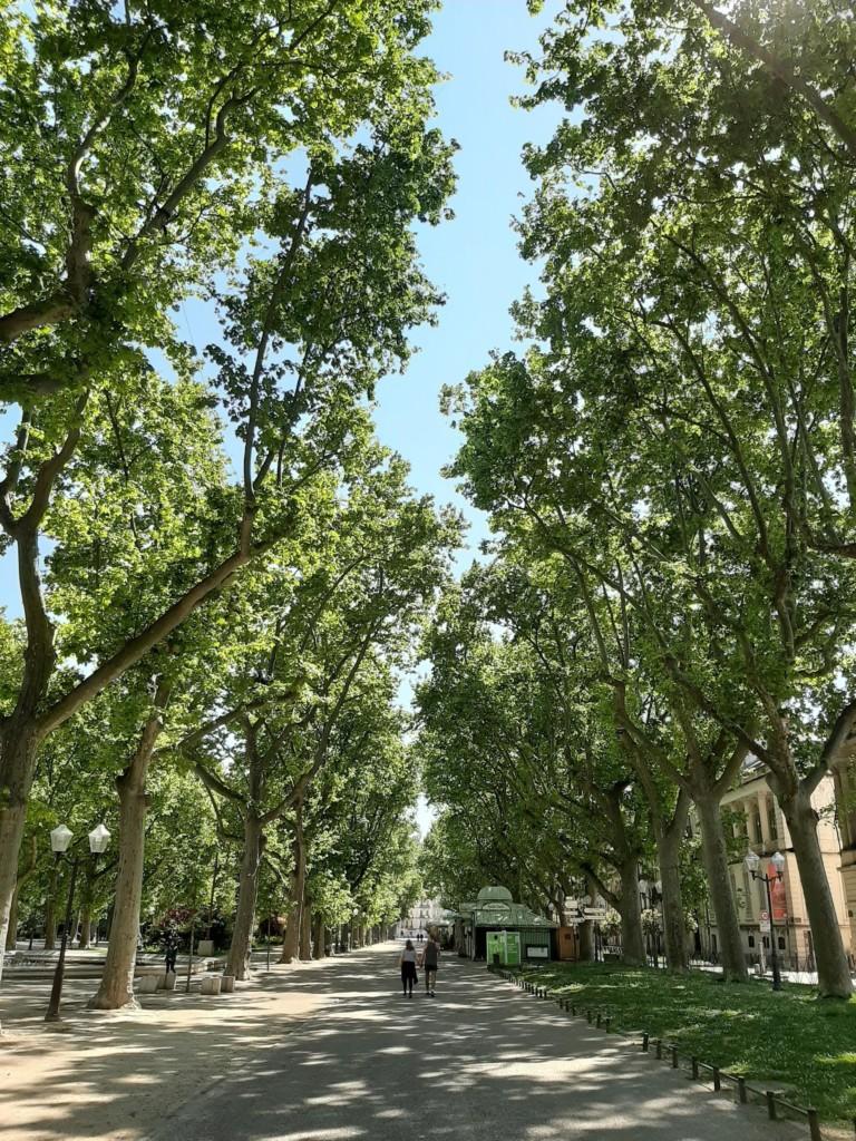 La respiration offerte par le parc de la Comédie (photos : E. Gabet)