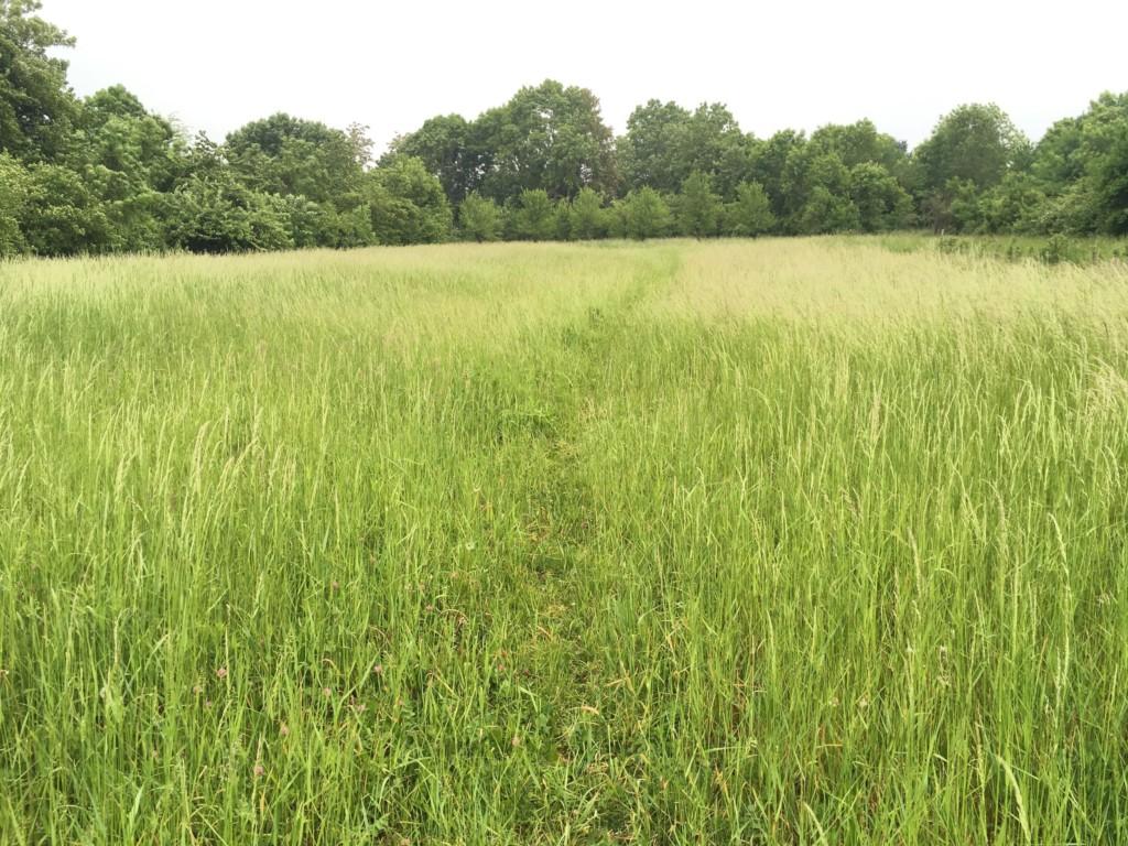 Un chemin dans une parcelle agricole délaissée à Mareil-Marly. (photos : Q. Lefèvre)
