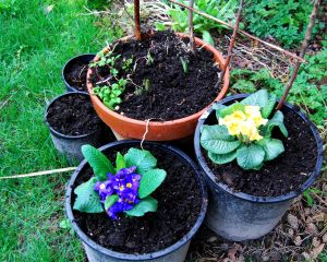 Pots are a quick way to boost space.