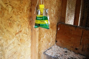 The traps attract flies with smelly bait; when the fly goes in they drown in water.  These work great but the odor can get intense.