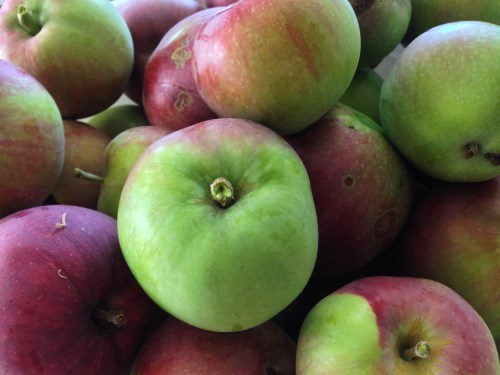 First pick your apples.  It's ok if they have blemishes or worm holes.  You can cut these out.