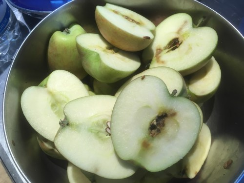 First we chopped up the apples and cut out the brown pieces.