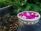 A basket of rose petals