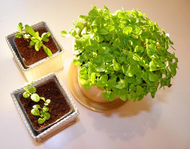 joy_planters