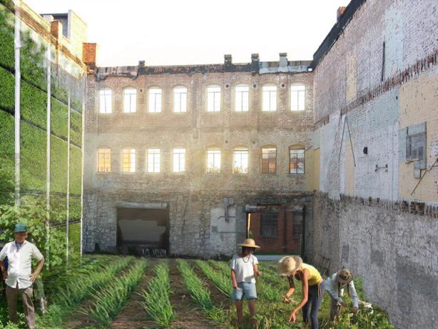 kitchen_garden