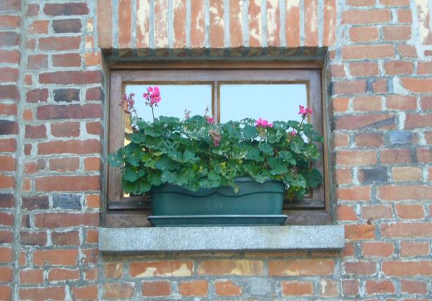 window_box