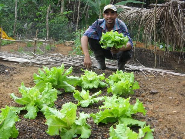 dominican_republic_garden_man