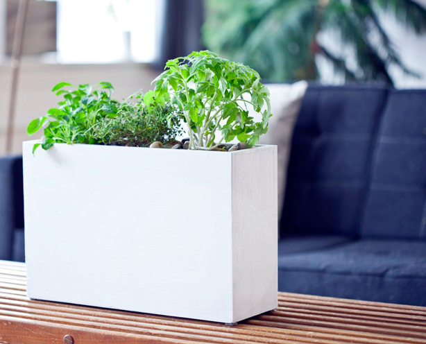 High Quality Modern Sprout White