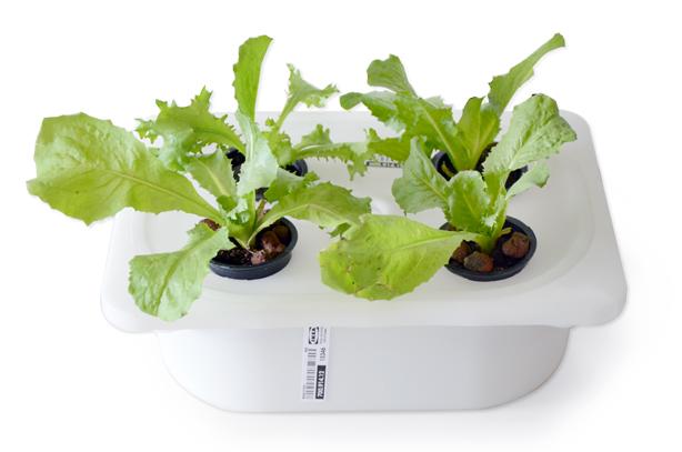 ELIOOO4_WHITE-planted