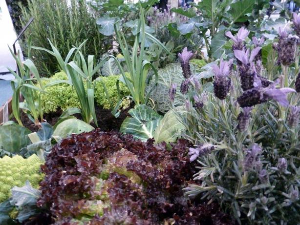 Edible-border-raised-bed