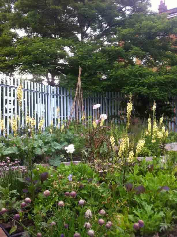 midnight-apothecary-garden-brunel-museum-london