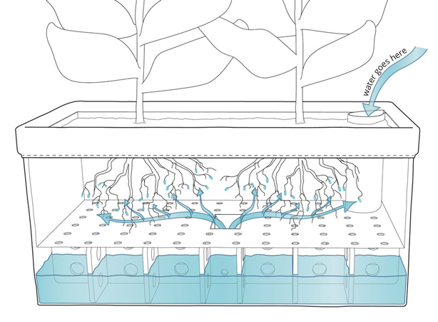 patch-self-watering-diagram